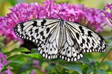 butterfly-4002223_1920